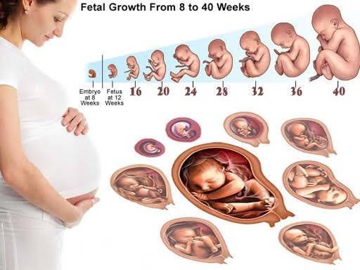 Siêu âm lúc nào tính tuổi thai chính xác nhất