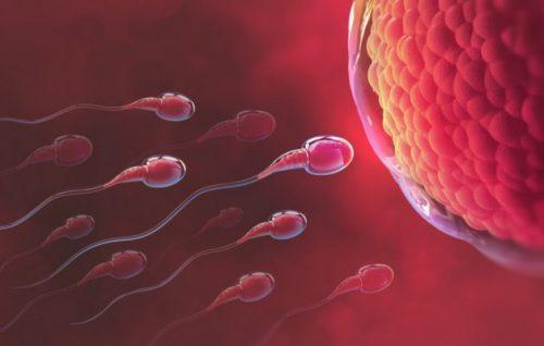 Các phương pháp xác định ngày rụng trứng
